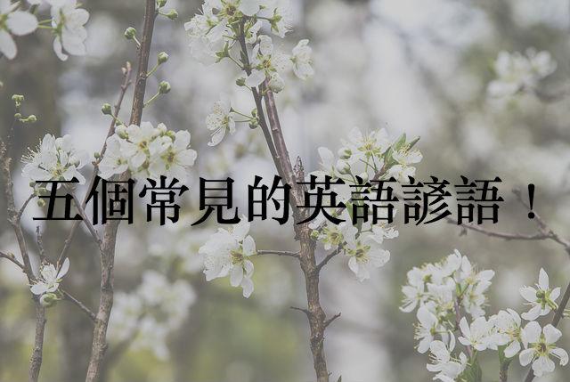 flower-656030_640