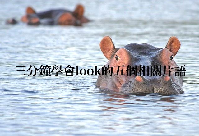 hippo-515027_640