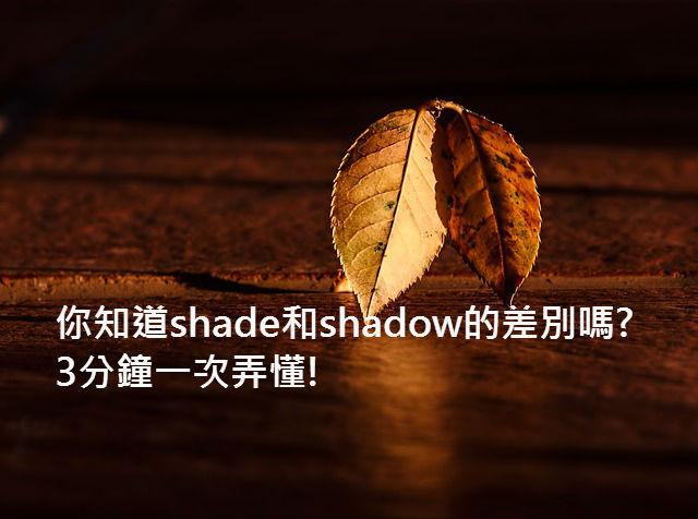 leaf-409258_640