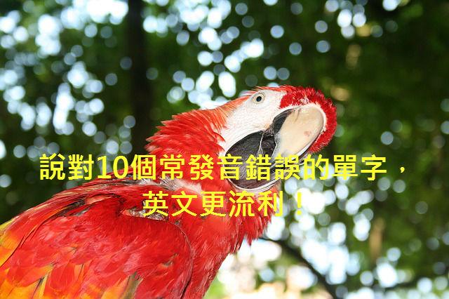 parrot-1070624_640