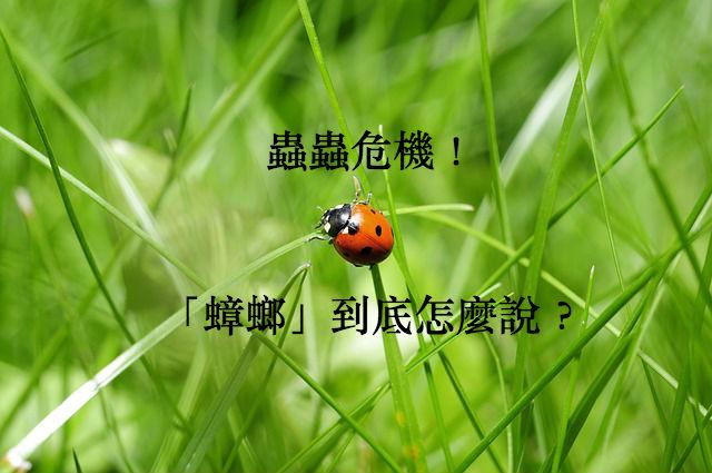 ladybug-796481_640