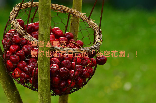cherries-1503974_640111