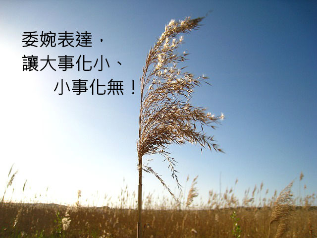 reed-1363117_640