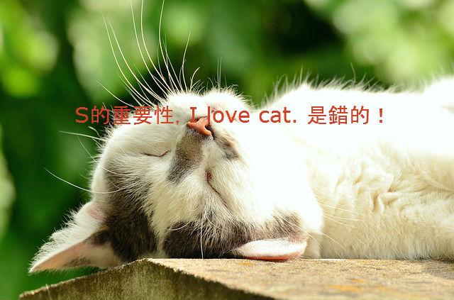 cat-1551783_640111