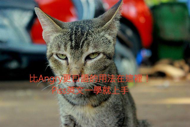 cat-390052_640111