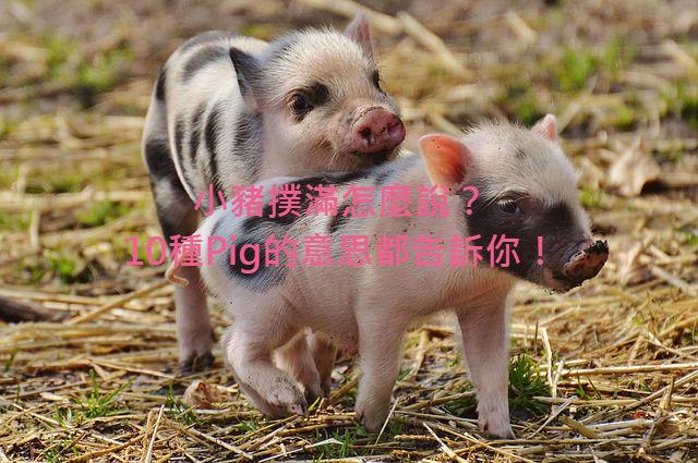 piglet-1332259_640