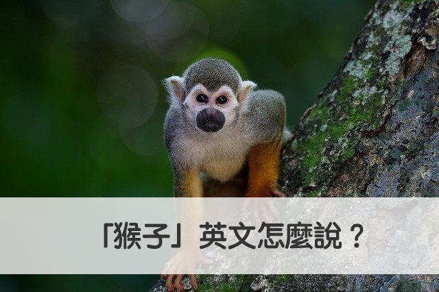 猴子 英文