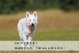 bite 中文意思