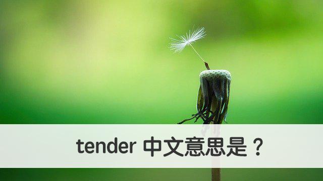 tender 中文意思