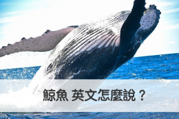 鯨魚 英文