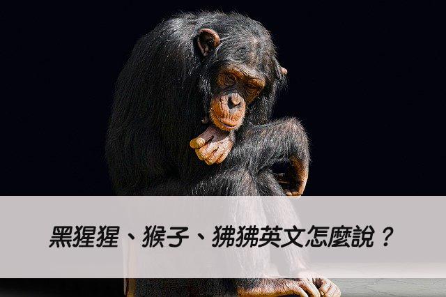 黑猩猩、猴子、狒狒英文