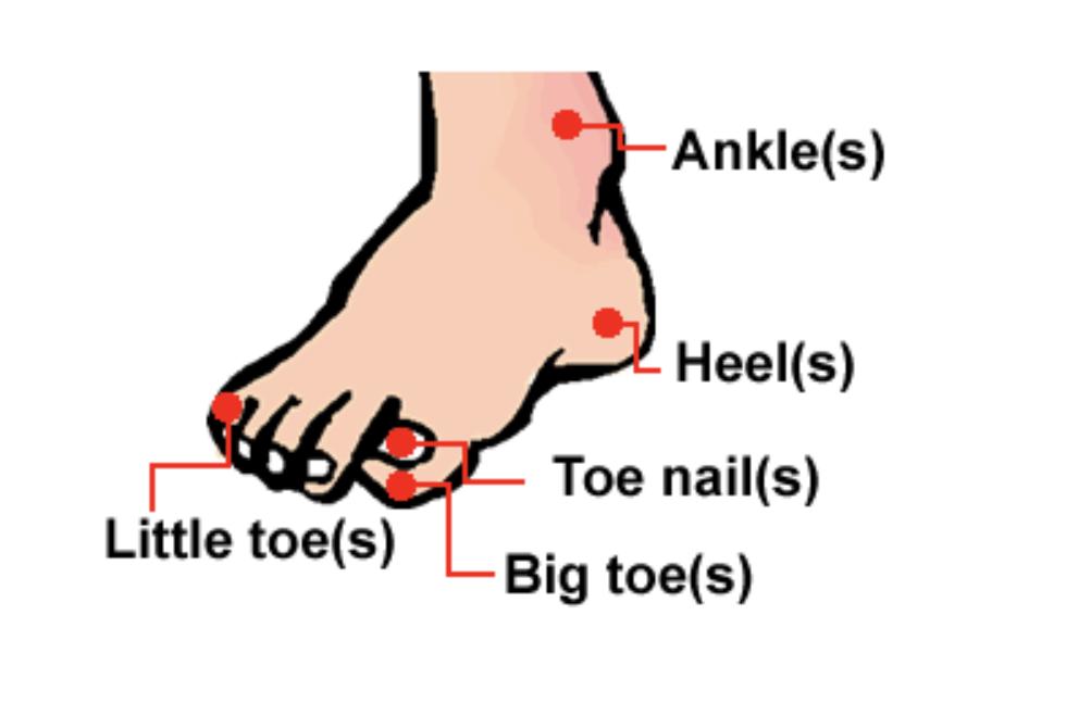 腳踝、腳跟、腳指頭...英文怎麼說?