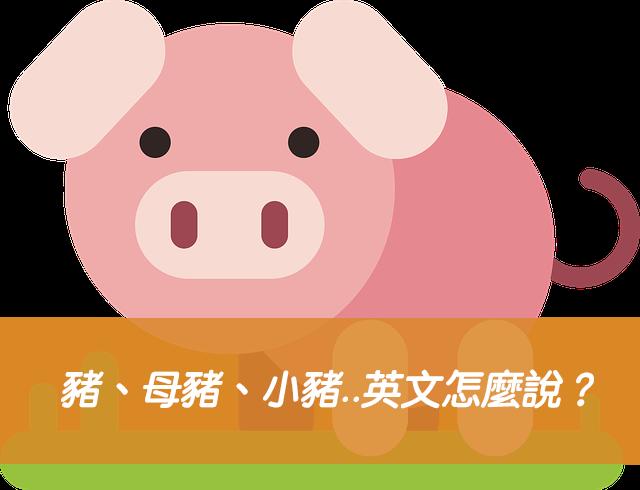 豬、母豬、小豬、豬叫聲..英文怎麼說?搞懂pig / sow / piglet 中文意思