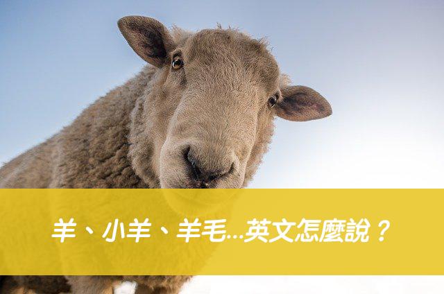 羊、小羊、羊毛...英文怎麼說?搞懂sheep/ lamb/ wool 中文意思